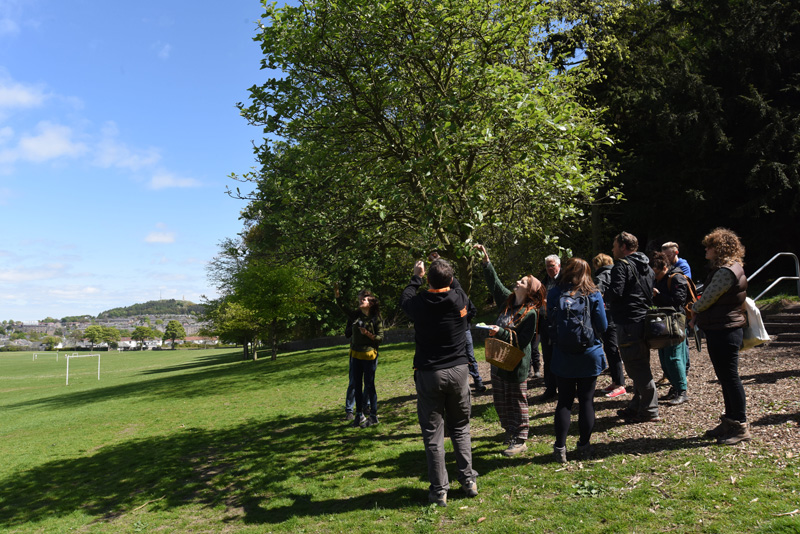 Foraging - Dundee May 2016